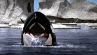 Orca – The Killer Whale DVD Review